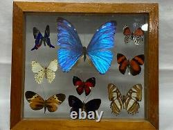 2 Display Real butterfly Double Glass Shadow Box Wood Frame Case Taxidermy EUC