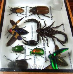 Real 3 Box Insect Bug Bee Animal Taxidermy Display Framed Case Kit Decor gpasy