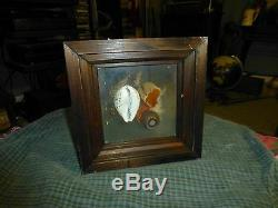 Vintage Taxidermy Butterfly's In Wood Glass Display Case VG
